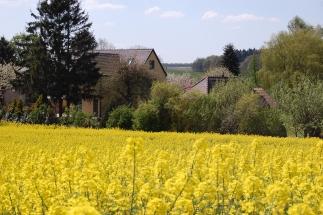 Haus im Rapsfeld