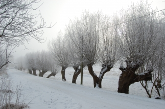 Winterstrasse